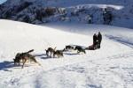 Sled dog rides